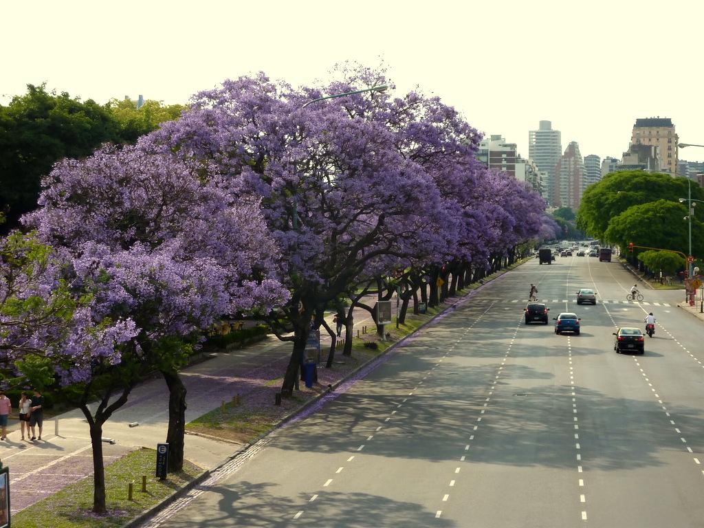 Los mejores t neles de rboles de buenos aires malevamag for Arboles perennes en argentina