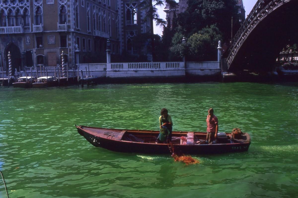 Green Venice - Venecia 1968 - Fotografía (2)